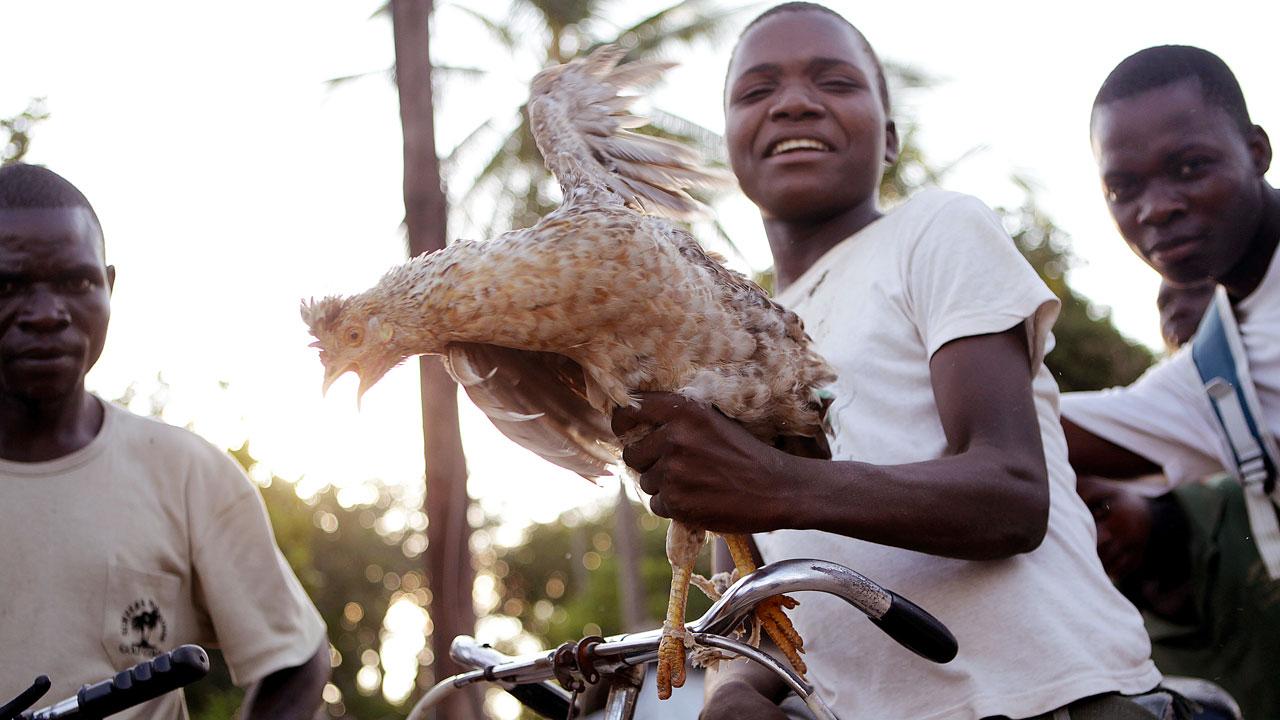Ung man med cykel presenterar en höna