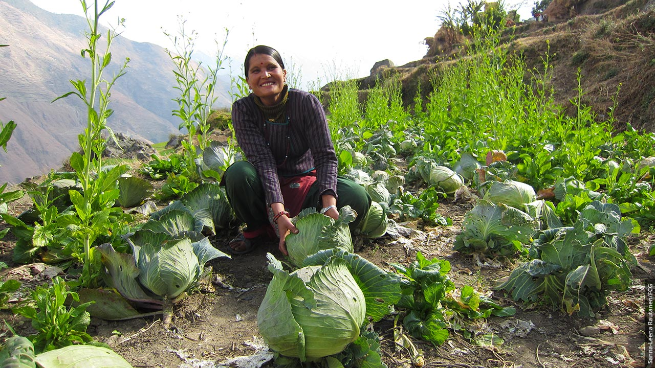En leende nepaliska kvinna prenterar stora kål på bergens slutning